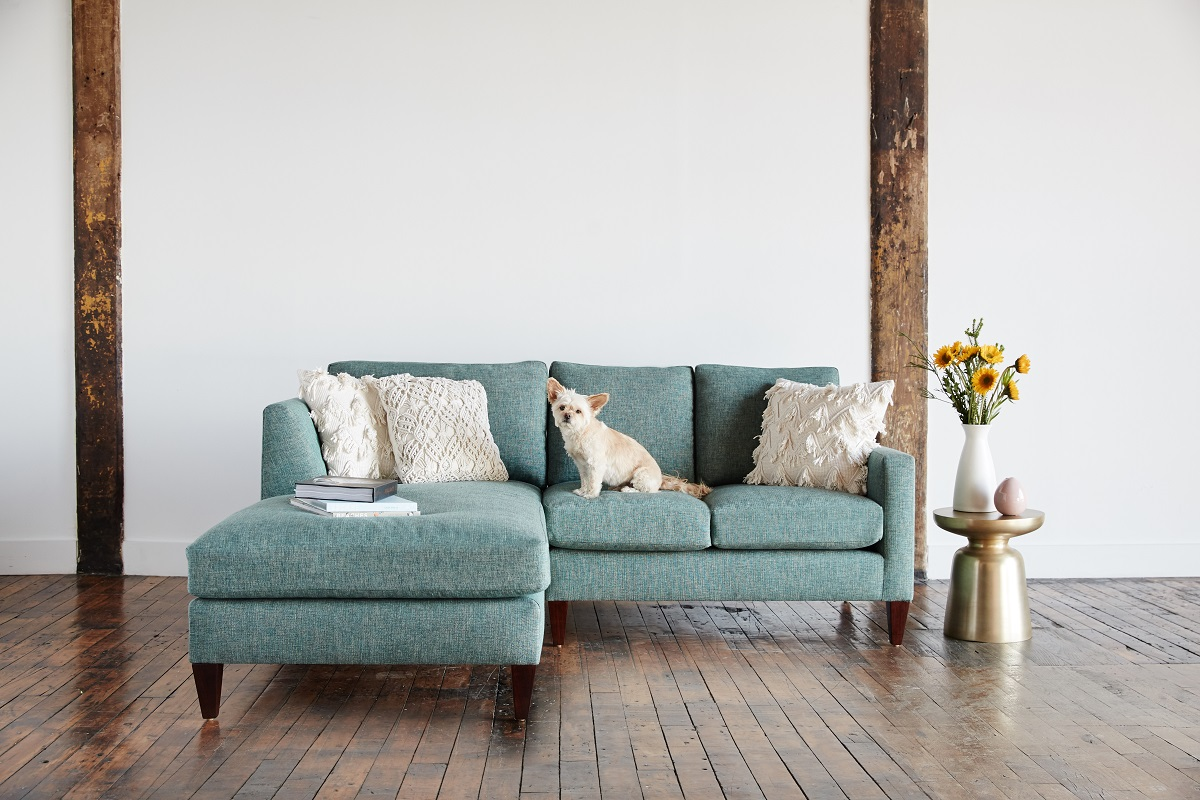 Green sofa with dog